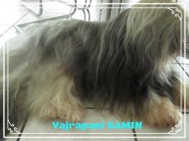 Deckrüde Tibet Terrier, Brachttal, house-of-lucky-charms.de