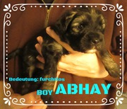 House of Lucky Charms, Tibet Terrier Welpen 4 Wochen, Rüde ABHAY, 30.10.18, 15:27 Uhr