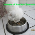 House of Lucky Charms