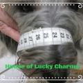 Maßanfertigung eines Maulkorbs von BUMAS in Facebook, House of Lucky Charms