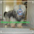 Tibet Terrier Samin hat einen für ihn angefertigten BUMAS Maulkorb, Wunschfarben waren auch dabei, House of Lucky Charms