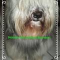 Glücklicherweise hat Samin, unser Tibet Terrier den BUMAS Maulkorb bisher nie benötigt, House of Lucky Charms